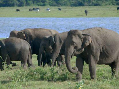 Elefantes en el Parque Nacional Kaudulla, Sri Lanka.