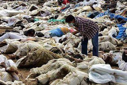 Un ciudadano tailandés busca a sus seres queridos entre los cadáveres de las víctimas producidas por el <i>tsunami</i>.