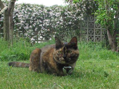 Un gato, con una cámara que capta su comportamiento diario.