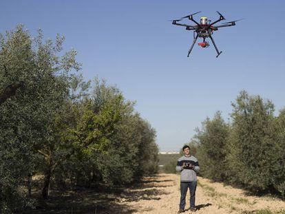 Un técnico controla un dron en una explotación de Primor en Sevilla.