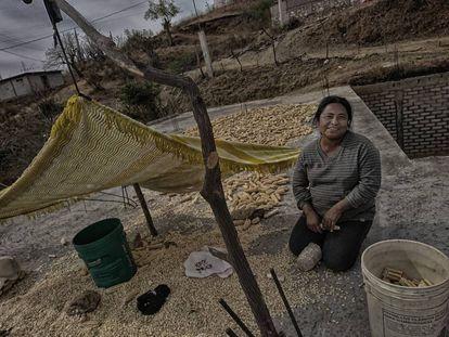 Lucina Urbano trabaja el maíz seco en el tejado de su casa, en Santos Reyes Yucuná.