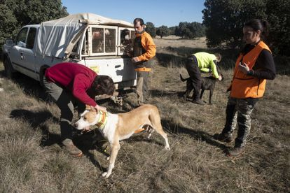 Identificación mediante collares a los perros de unos cazadores, durante una montería reciente en Soria.