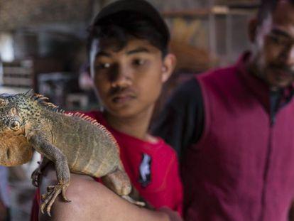 Un vendedor del mercado de Pramuka, en Yakarta, exhibe una iguana de Kalimantán.