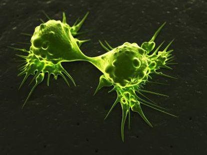 Células tumorales dividiéndose.