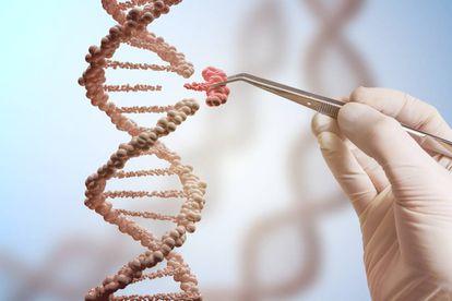 La técnica CRISPR permite reemplazar trozos de ADN
