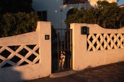 Un perro contempla la calle en la puerta de una vivienda de la colonia.
