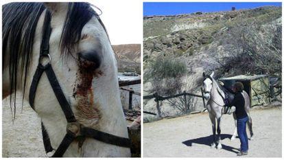 'Roco', a la izquierda tras ser atacado y a la derecha con Illona.