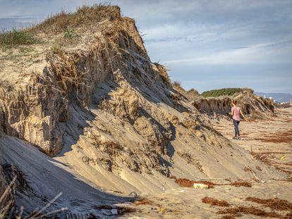 Estado en que quedaron las dunas de El Saler (Valencia) tras un temporal que ayudaron a contener.
