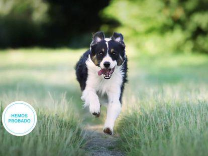 Ponemos a prueba tres de los mejores collares GPS para perros y gatos del mercado.