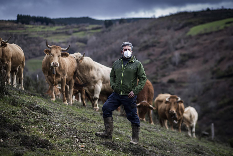 Fermín Fernández, vecino de Lamas (Cervantes), con algunas de sus vacas, alimentadas al aire libre en las montañas de Os Ancares.