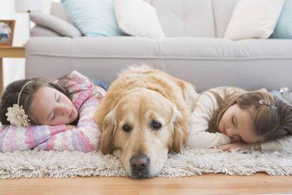 Todos los miembros del hogar deben seguir las mismas pautas para el animal no reciba mensajes contradictorios.