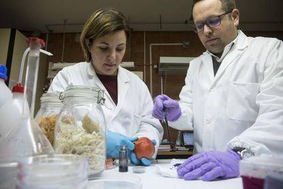 Los investigadores de la Universidad de Málaga Susana Guzmán y Alejandro Heredia.