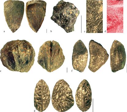 Restos carbonizados de frutos comestibles encontrados en Prigglitz-Gasteil.