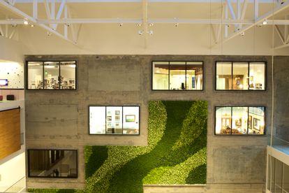 Ventanales y una aplicación de césped vertical en una de las paredes interiores de la oficina de Arbnb en San Francisco.