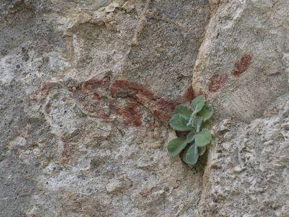 Uno de los dibujos supuestamente rupestres de la sierra de Algodonales, en Cádiz.