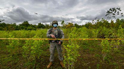 Un soldado colombiano durante una operación para erradicar cultivos de coca en Tumaco, Nariño, en diciembre de 2020.