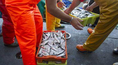 Unos pescadores descargan pescado en la lonja de pescado de Berbés, puerto de Vigo (Pontevedra).