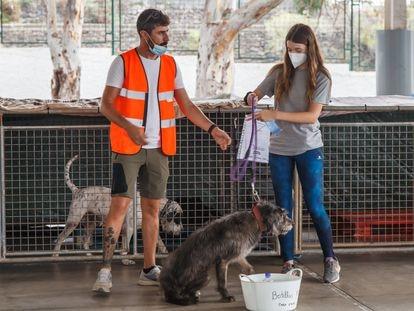 Varios voluntarios participan en la reubicación de animales encontrados solos en las calles por la erupción volcánica de La Palma, el 29 de septiembre.