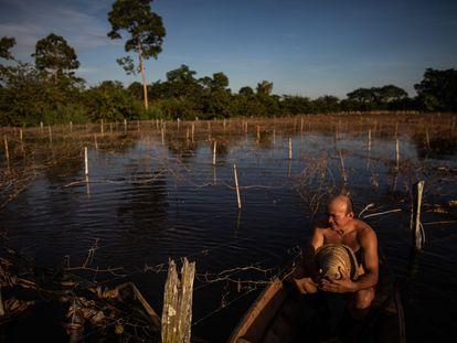 """El agricultor Noé Vieira do Carmo, de 44 años, muestra la magnitud del daño de las inundaciones a su plantación de maracuyá, el 23 de mayo de 2021, en la comunidad de Vila do Cuinha de Amazonas (Brasil). """""""