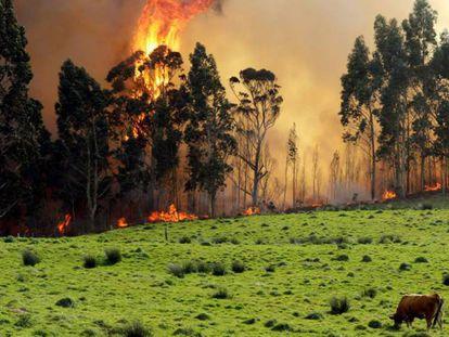Incendio en las proximidades de Naves (Llanes), este lunes. / En vídeo, el viento dificulta la extinción de los incendios en Asturias.