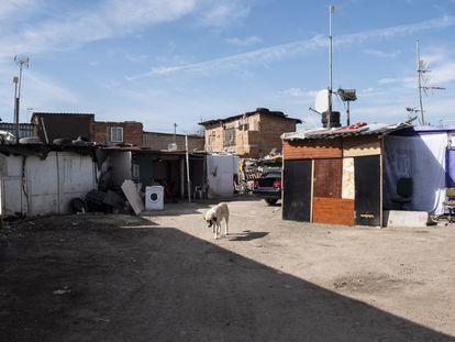 Un perro pasea en medio de las chabolas que hay en la parte trasera de la casa donde el clan de los Kikos tenía su punto de venta de drogas.
