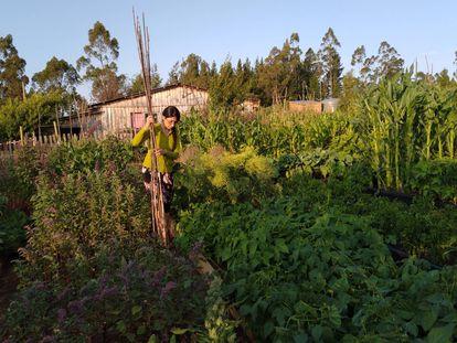 Cultivar y cocinar la diversidad de la tierra chilena