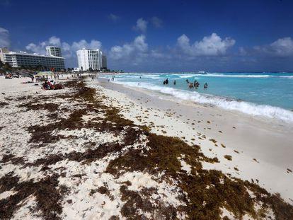 Sargazo en una playa del Caribe mexicano.