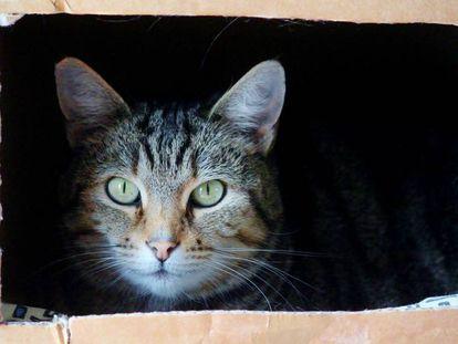 A Erwin Schrödinger su ejemplo del gato en la caja le parecía ridículo