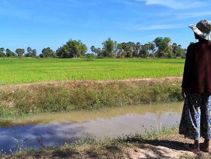 Una vecina de Ou Ta Prok (Camboya) contempla los arrozales cultivados frente a su pueblo a principios de noviembre de 2019.