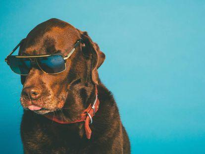 Cuándo hay que poner gafas de sol al perro y otras diez dudas de dueños de mascotas resueltas por expertos