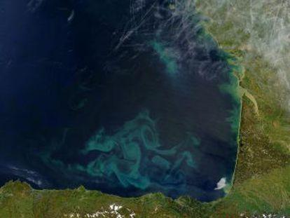 El cambio climático está afectando al fitoplancton marino, lo que altera el espectro de luz solar reflejada