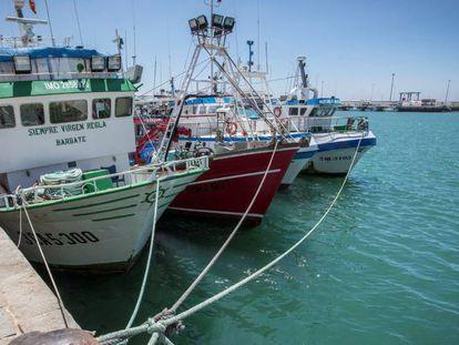 Barcos andaluces que se acogen al acuerdo de pesca con Marruecos, amarrados en el puerto de Barbate (Cádiz) en septiembre de 2019.