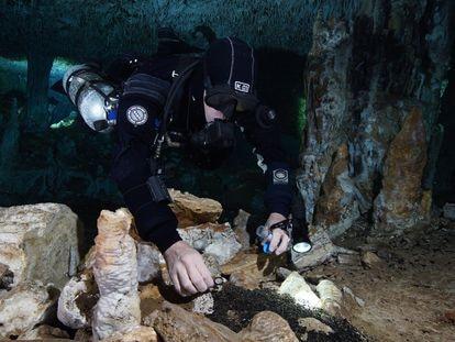 Un buceador toma muestras de los restos de madera quemada por los humanos del Pleistoceno para iluminar las labores de minería subterránea.