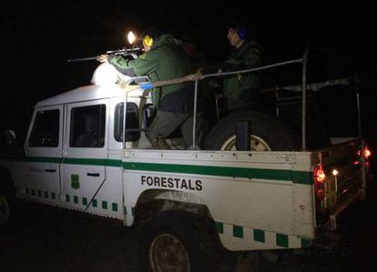 Agentes forestales realizan un operativo en Girona, en una foto de archivo.