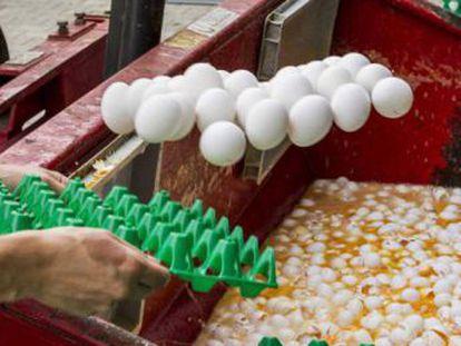 La policía lanza redadas en Holanda y Bélgica contra los responsables del fraude del pesticida fipronil