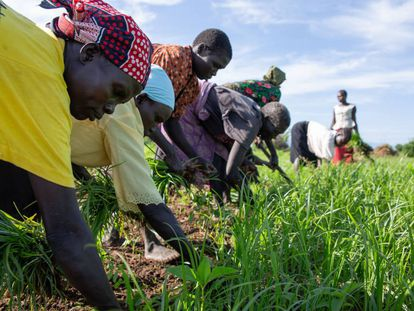 Agricultores en Sudán del Sur.