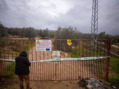 Cierre de una plantación de cáñamo en la provincia de Cádiz.