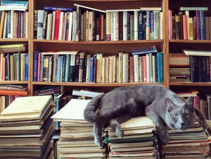 Un felino en una librería.