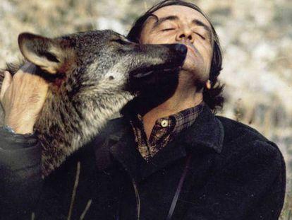Foto: Félix Rodríguez de la Fuente abraza a un lobo durante el rodaje de la serie Fauna Ibérica / RTVE Vídeo: Tras las huellas de Félix Rodríguez de la Fuente / Carlos Spottorno