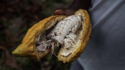 FOTOGALERÍA: Puro cacao ecuatoriano, sostenible y justo.