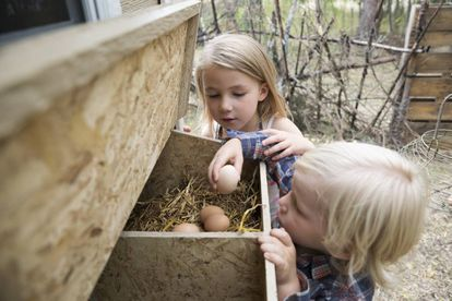 La alergia al huevo es una de las habituales en los niños.