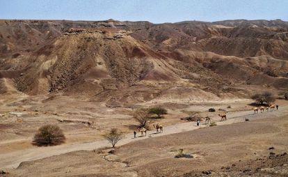 Unma caravama de camellos atraviesa la zona de Lee Adoyta, donde en enero de 2013 un estudiante descubrió la mandíbula.