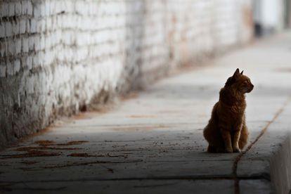 Un gato en una calle vacía, en Lima (Perú).