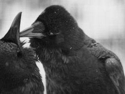 Understanding the evolution of a birdbrain's mind