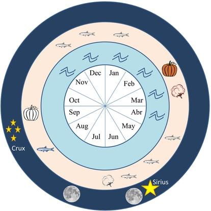 Cronograma de los cultivos, representados con una calaba y algodón, (la siembra en blanco y negro y cosecha en color) y las épocas de pesca, representada con un pez, (desove en color) en el valle del Supe y la costa, los meses de crecida y los fenómenos astronómicos relevantes. Las lunas indican el período de visibilidad de la Luna llena antes y después del solsticio de junio, en la sección sureste del horizonte. Las estrellas señalan el ascenso helíaco de Sirio y de la Cruz del Sur en Caral.