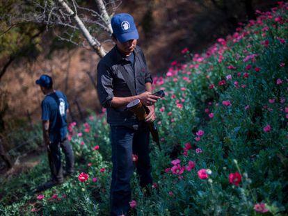 Un grupo de policías comunitarios custodian un plantío de amapola en la montaña de Guerrero, el 28 de septiembre de 2019.
