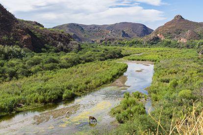 El río Sonora, que sufrió en 2014 el peor vertido minero de la historia de México, en julio de 2019.