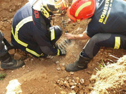 Los bomberos rescatan a los dos perros en Arganda del Rey.