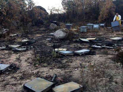 El apicultor José Ignacio Arroyo revisa las colmenas destrozadas tras el incendio forestal.