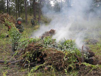 Miembros del ejército mexicano queman campos de amapola en el estado de Chihuahua.
